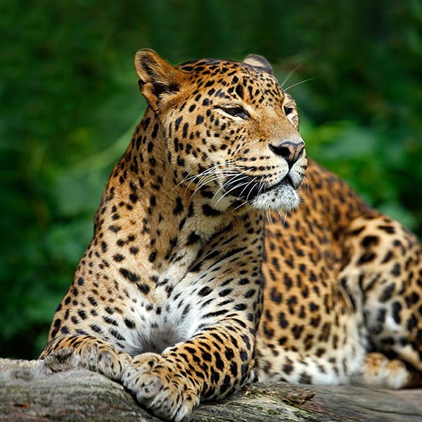 Relive Wild Sri Lanka